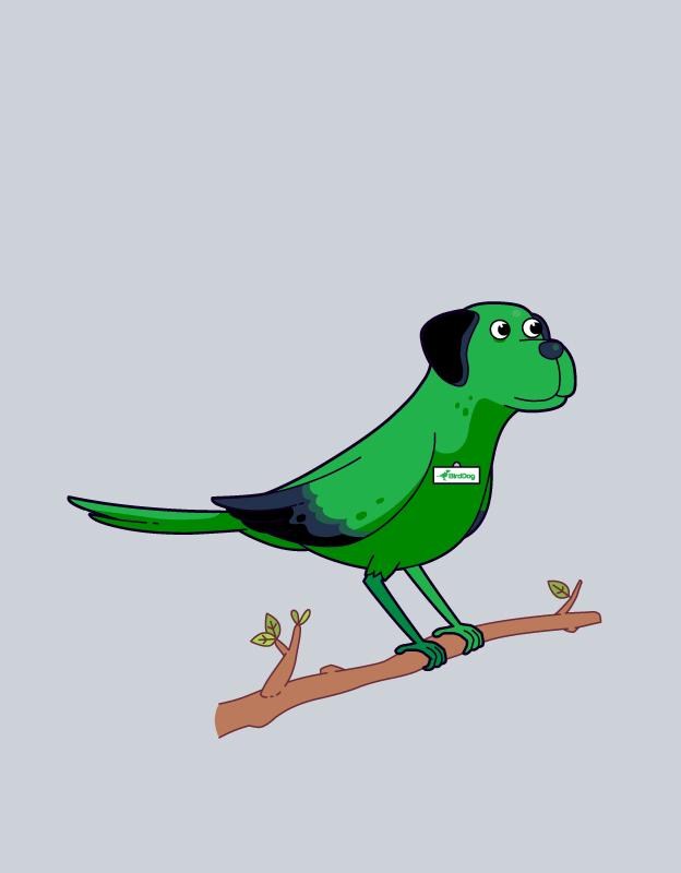 Bindi-Birddog
